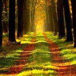 Wald ERholung, Ruhe frische Luft Urlaub Senioren